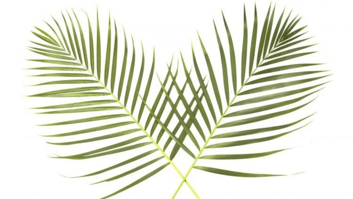 Palms Symbol